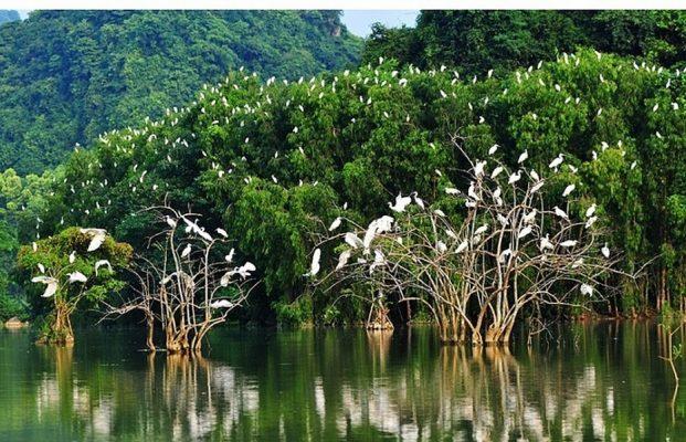 Hệ sinh thái tự nhiên và nguyên nhân khiến hệ sinh thái mất cân bằng